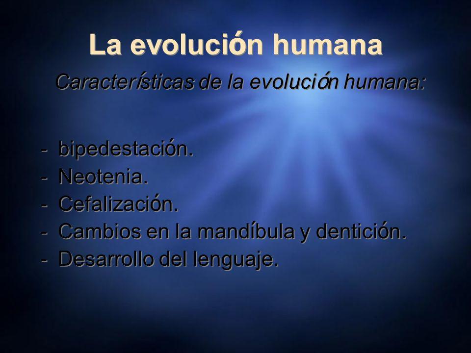 La evolución humana Características de la evolución humana: