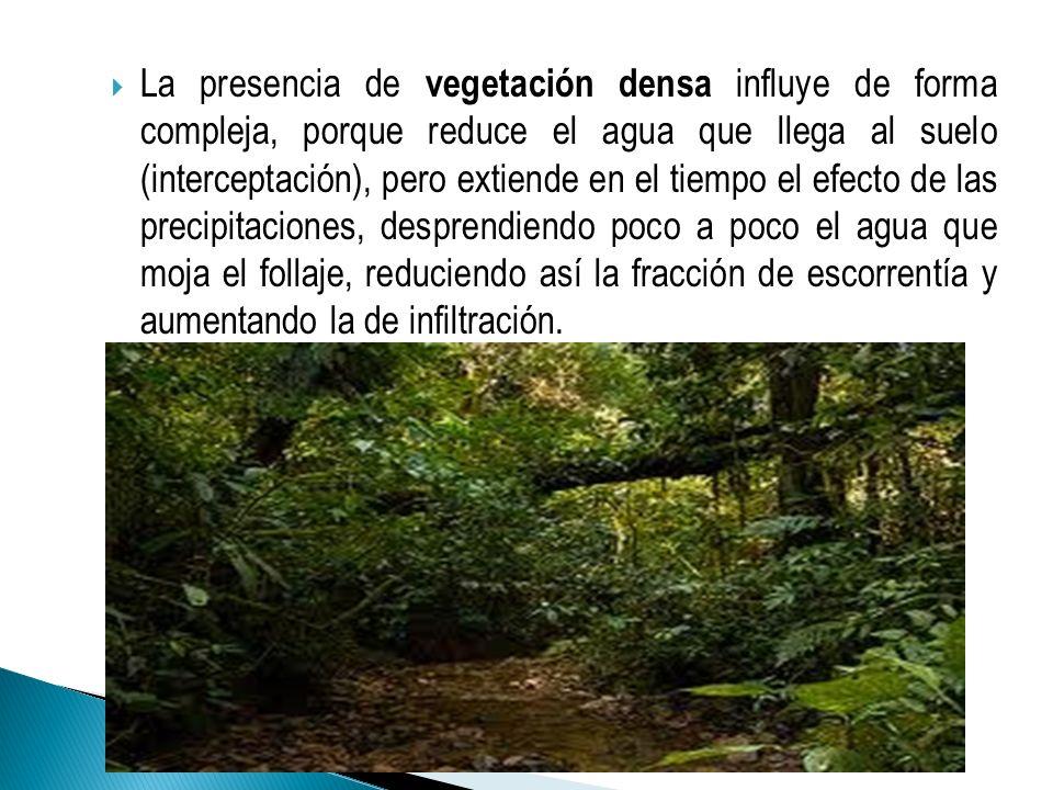 La presencia de vegetación densa influye de forma compleja, porque reduce el agua que llega al suelo (interceptación), pero extiende en el tiempo el efecto de las precipitaciones, desprendiendo poco a poco el agua que moja el follaje, reduciendo así la fracción de escorrentía y aumentando la de infiltración.