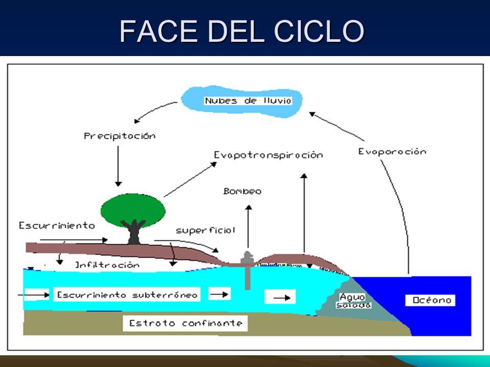 FACE DEL CICLO