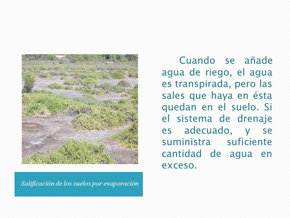 Salificación de los suelos por evaporación