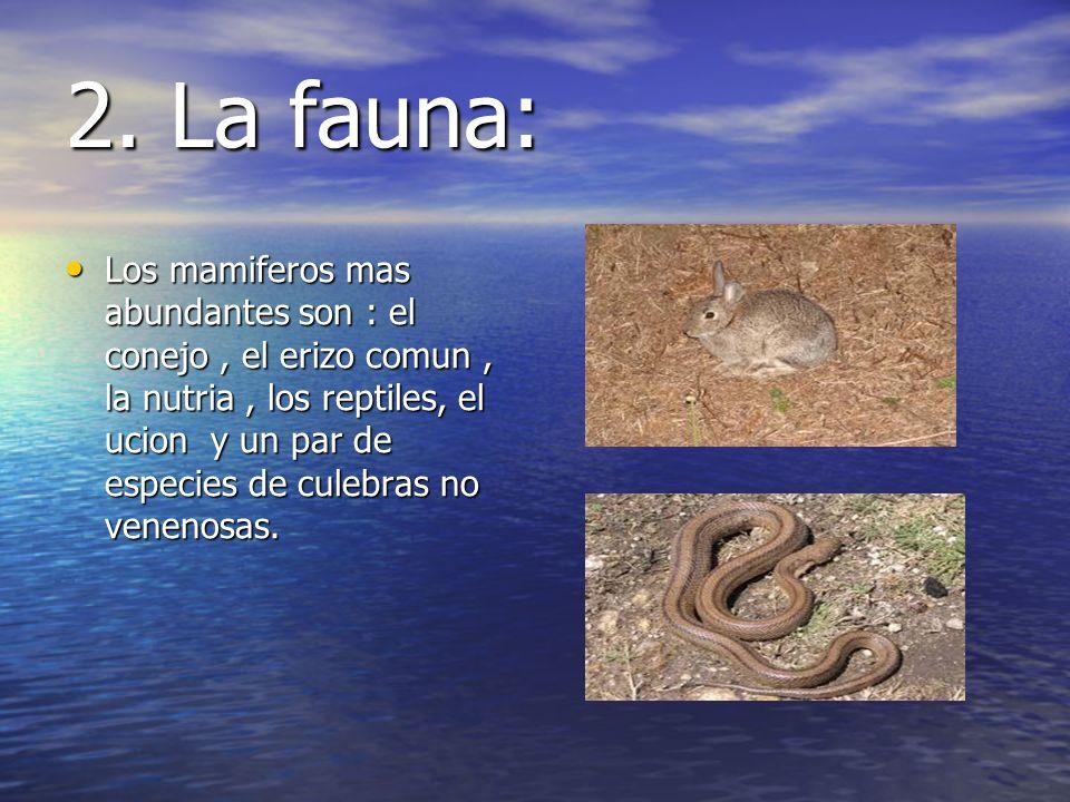 2. La fauna: