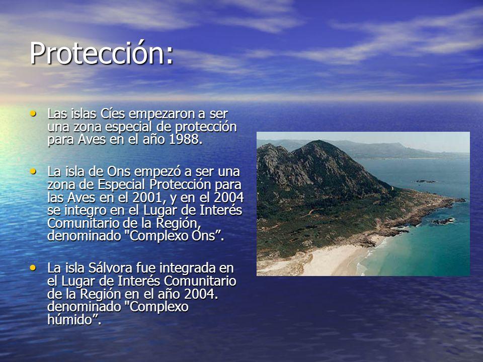 Protección:Las islas Cíes empezaron a ser una zona especial de protección para Aves en el año 1988.