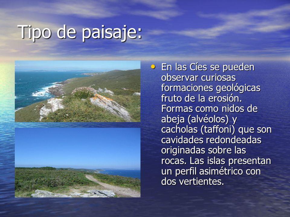 Tipo de paisaje: