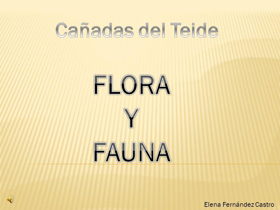Cañadas del Teide FLORA Y FAUNA Elena Fernández Castro