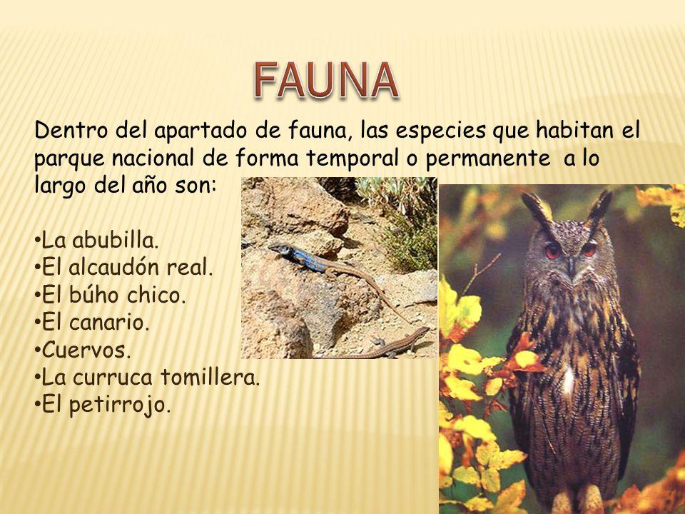 FAUNA Dentro del apartado de fauna, las especies que habitan el parque nacional de forma temporal o permanente a lo largo del año son: