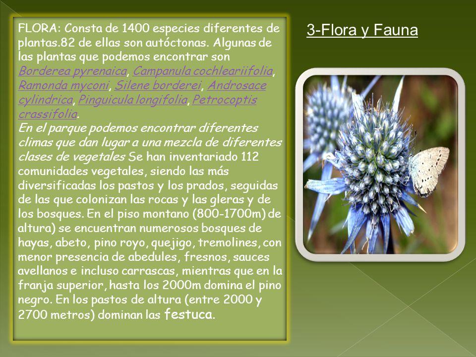 FLORA: Consta de 1400 especies diferentes de plantas