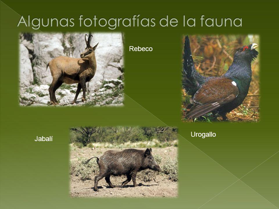 Algunas fotografías de la fauna