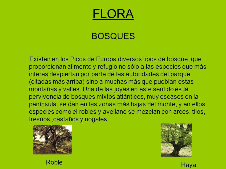 FLORA BOSQUES.