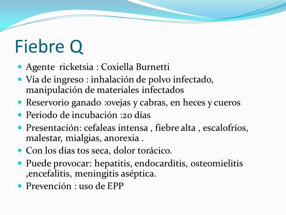 Fiebre Q Agente ricketsia : Coxiella Burnetti