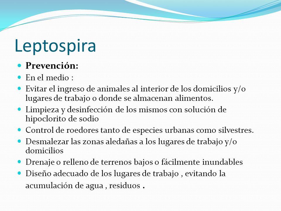 Leptospira Prevención: En el medio :