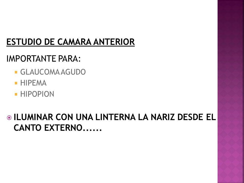 ESTUDIO DE CAMARA ANTERIOR IMPORTANTE PARA:
