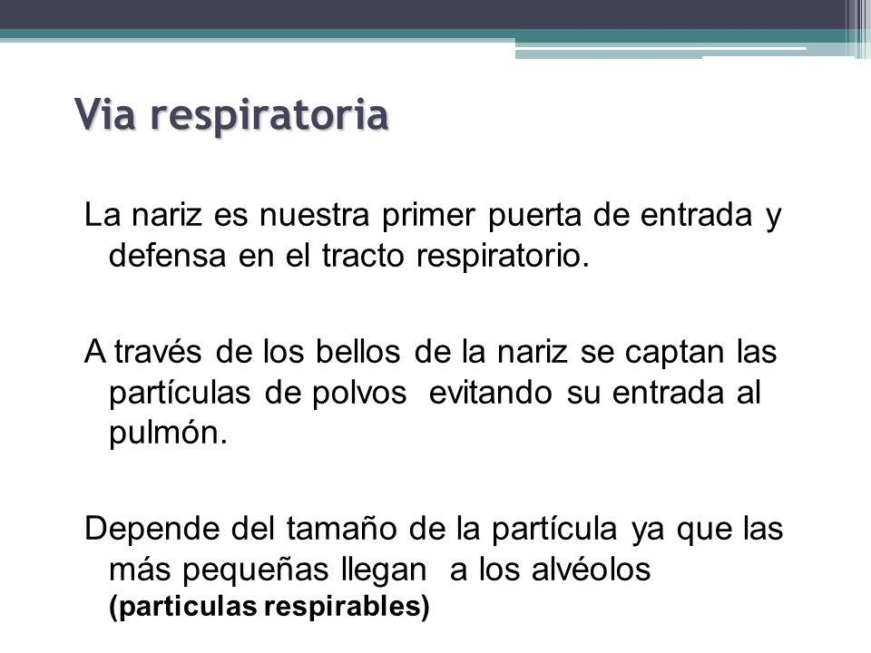 Via respiratoria La nariz es nuestra primer puerta de entrada y defensa en el tracto respiratorio.