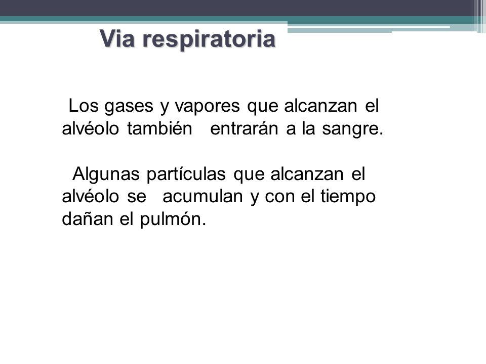 Via respiratoria Los gases y vapores que alcanzan el alvéolo también entrarán a la sangre.