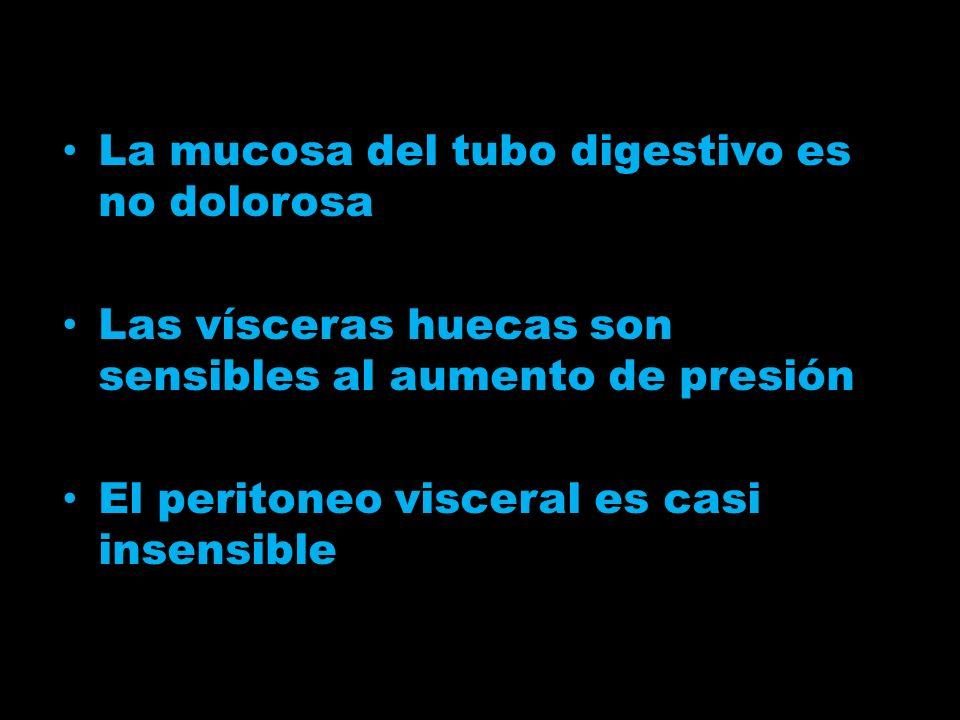 La mucosa del tubo digestivo es no dolorosa