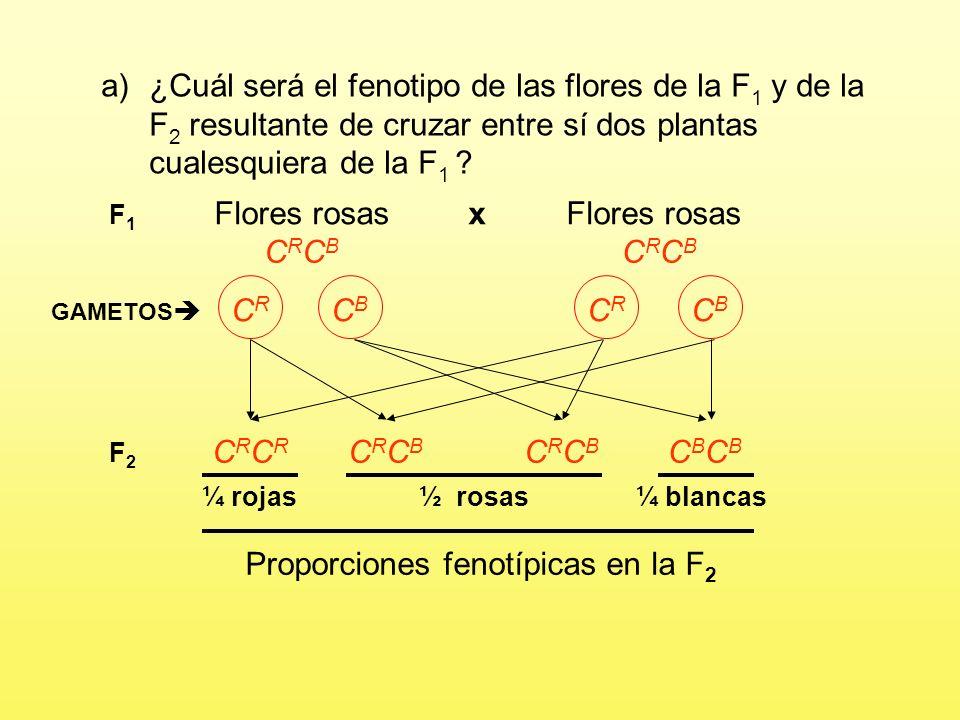 Proporciones fenotípicas en la F2