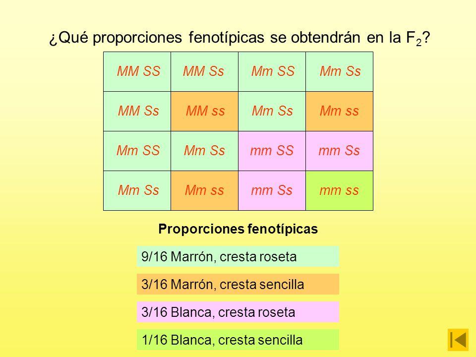 Proporciones fenotípicas
