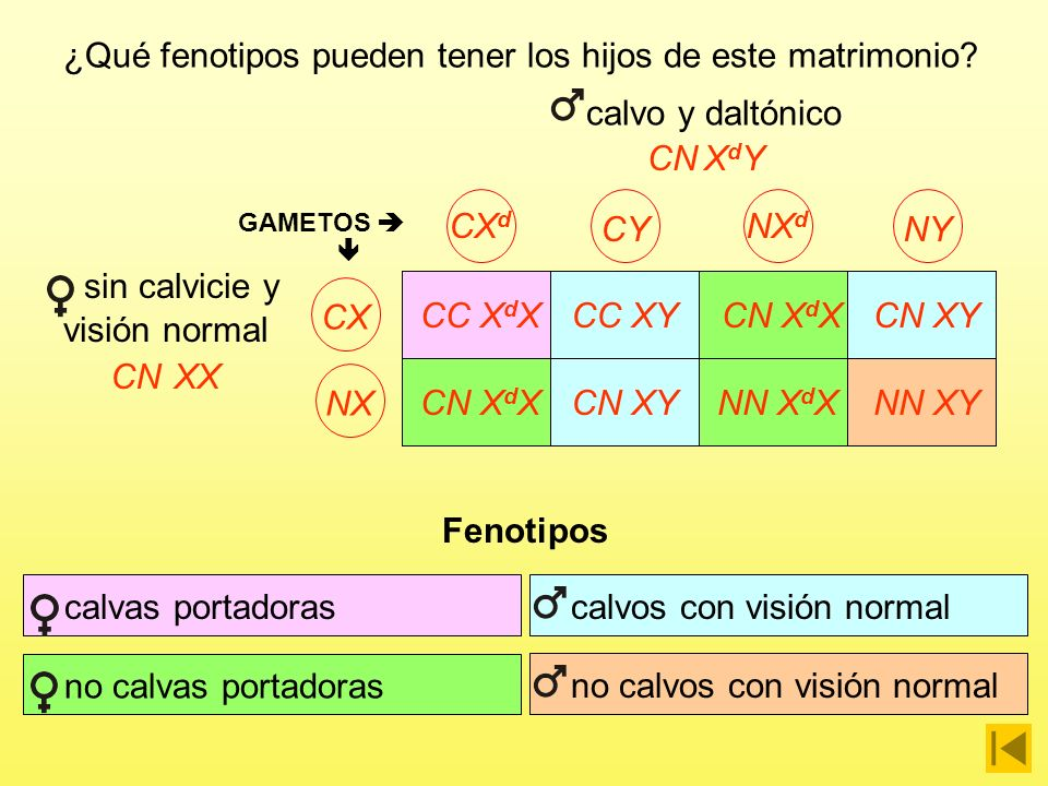 sin calvicie y visión normal
