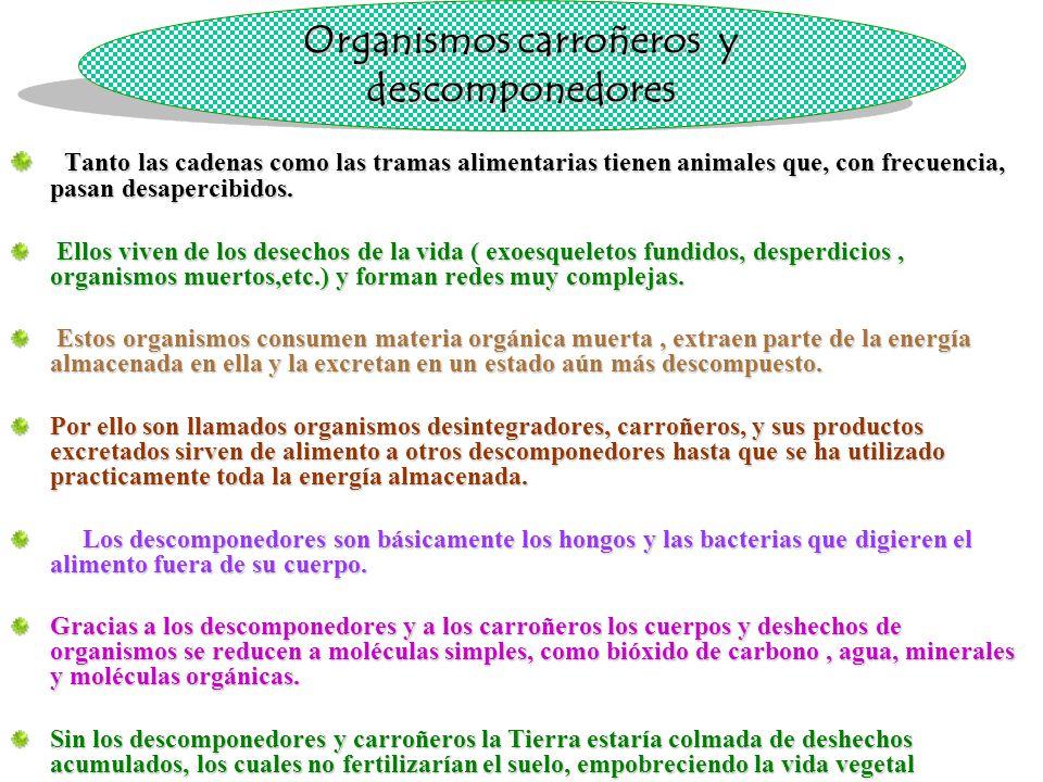 Organismos carroñeros y descomponedores