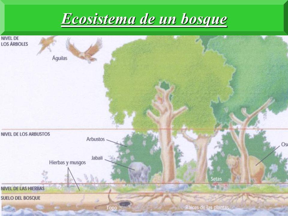 Ecosistema de un bosque