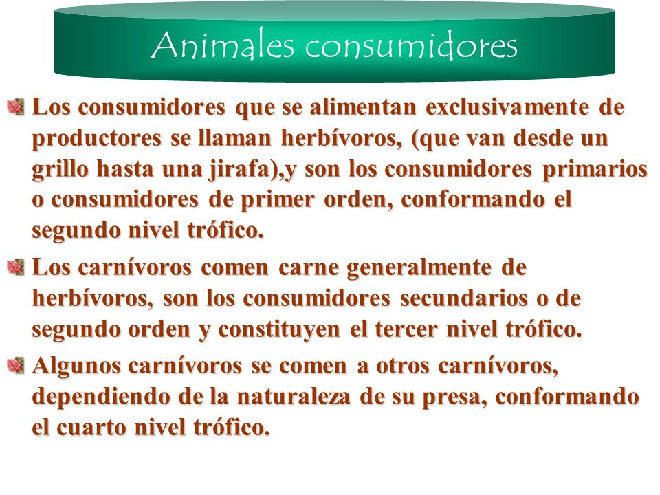 Animales consumidores