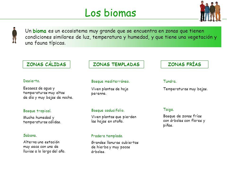 Los biomas
