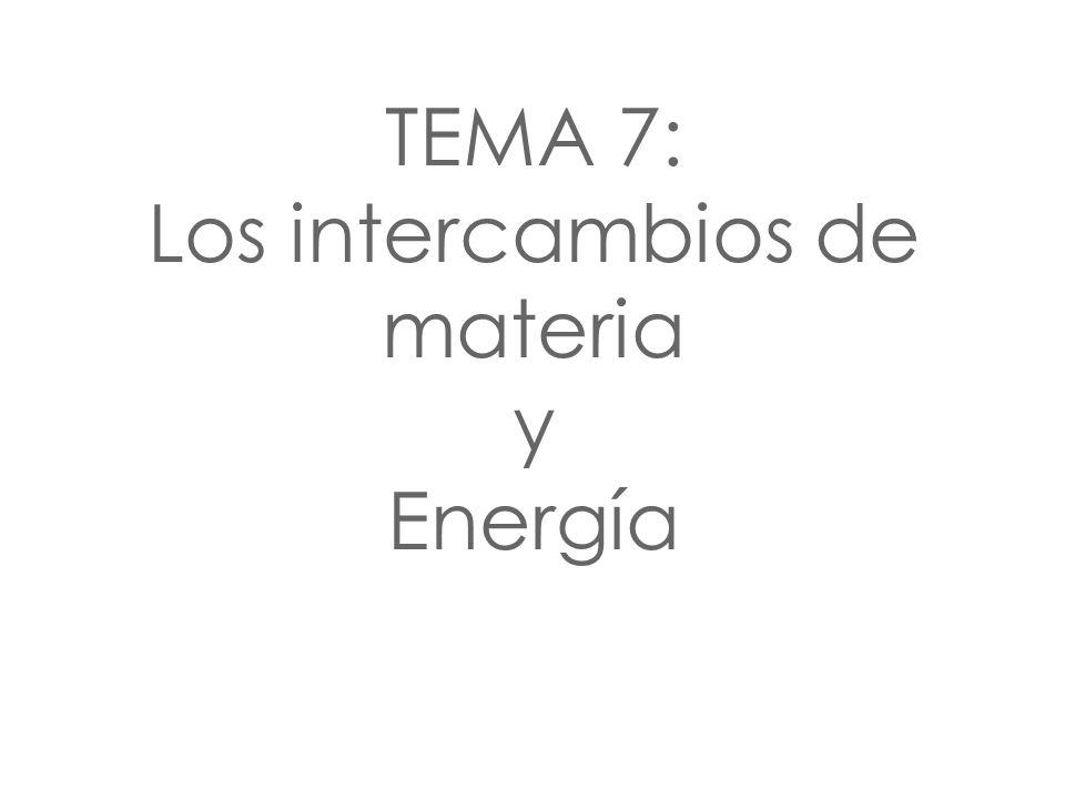 TEMA 7: Los intercambios de materia y Energía