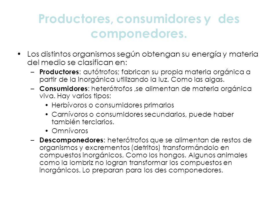 Productores, consumidores y des componedores.