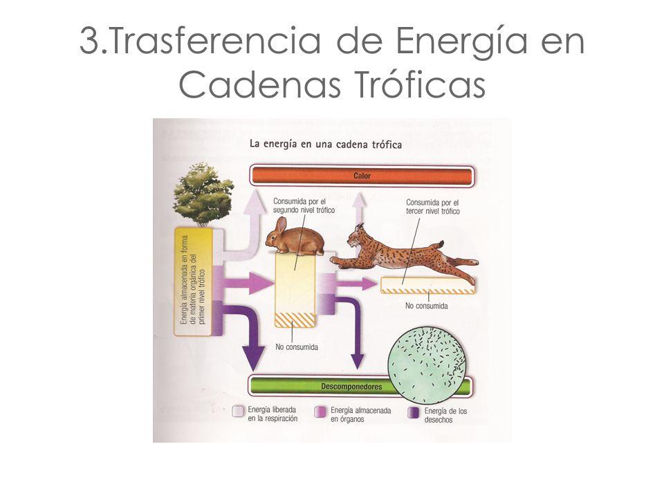 3.Trasferencia de Energía en Cadenas Tróficas