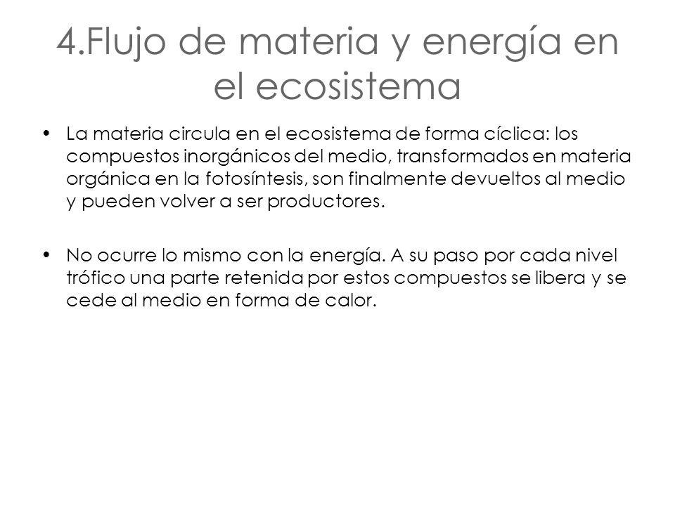 4.Flujo de materia y energía en el ecosistema