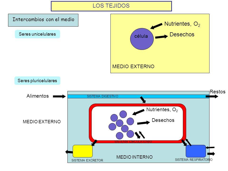 LOS TEJIDOS Nutrientes, O2 Desechos Intercambios con el medio célula
