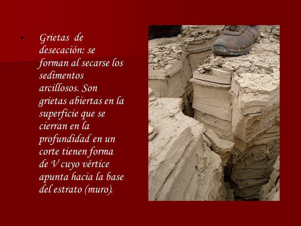 Grietas de desecación: se forman al secarse los sedimentos arcillosos