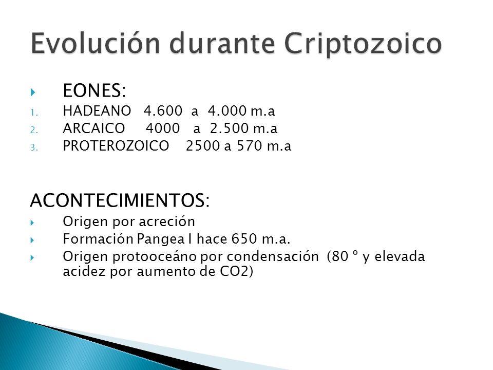 Evolución durante Criptozoico