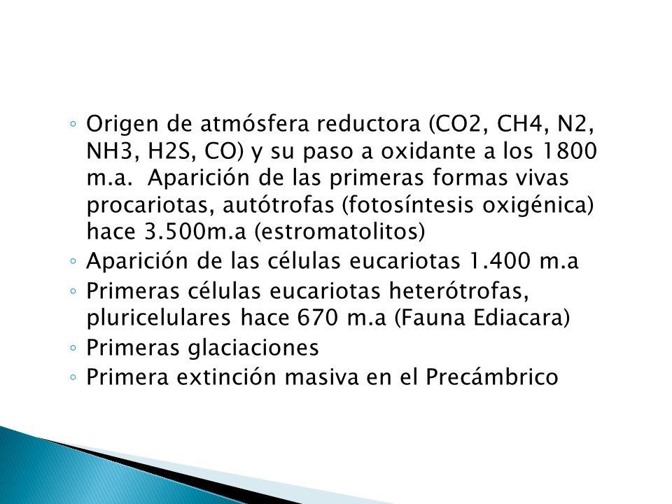 Origen de atmósfera reductora (CO2, CH4, N2, NH3, H2S, CO) y su paso a oxidante a los 1800 m.a. Aparición de las primeras formas vivas procariotas, autótrofas (fotosíntesis oxigénica) hace 3.500m.a (estromatolitos)