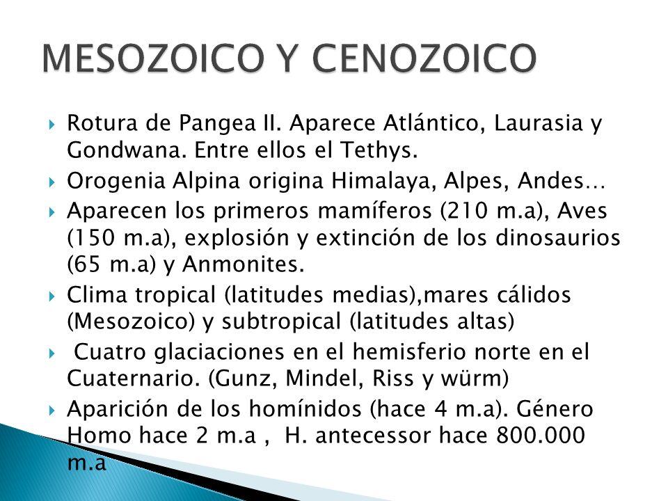 MESOZOICO Y CENOZOICO Rotura de Pangea II. Aparece Atlántico, Laurasia y Gondwana. Entre ellos el Tethys.