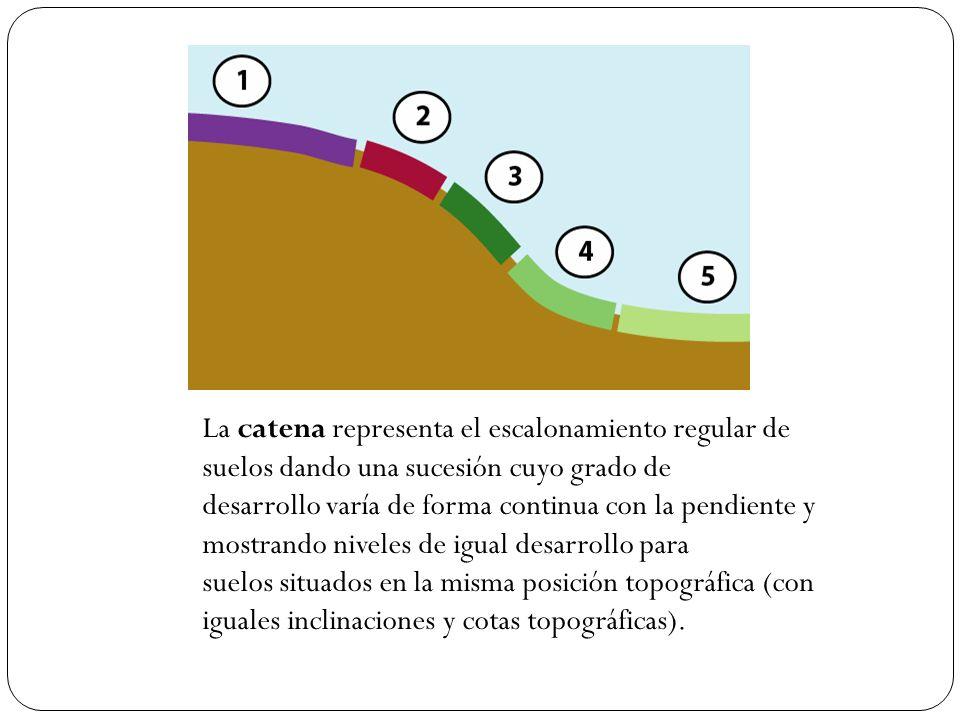 La catena representa el escalonamiento regular de suelos dando una sucesión cuyo grado de