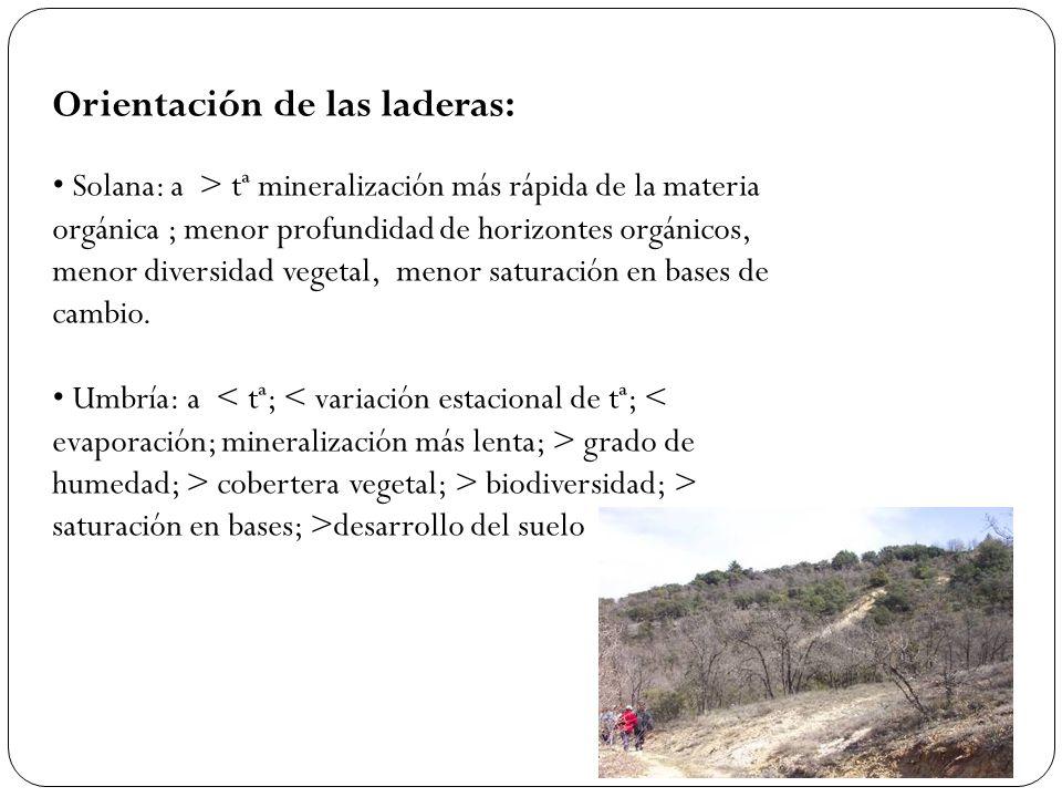 Orientación de las laderas: