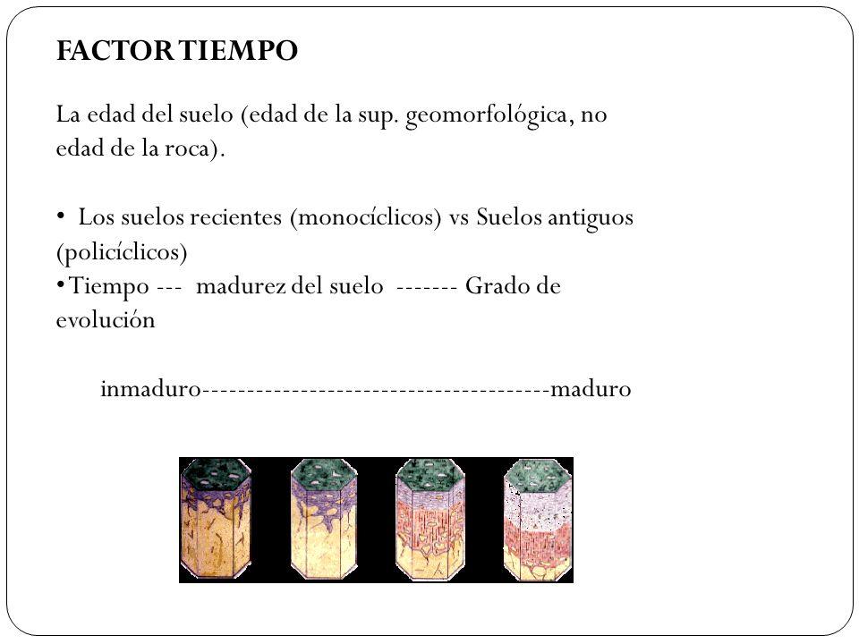 FACTOR TIEMPO La edad del suelo (edad de la sup. geomorfológica, no edad de la roca).