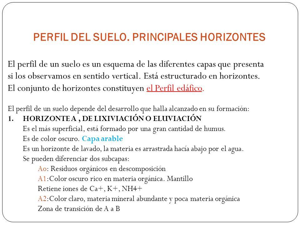 PERFIL DEL SUELO. PRINCIPALES HORIZONTES
