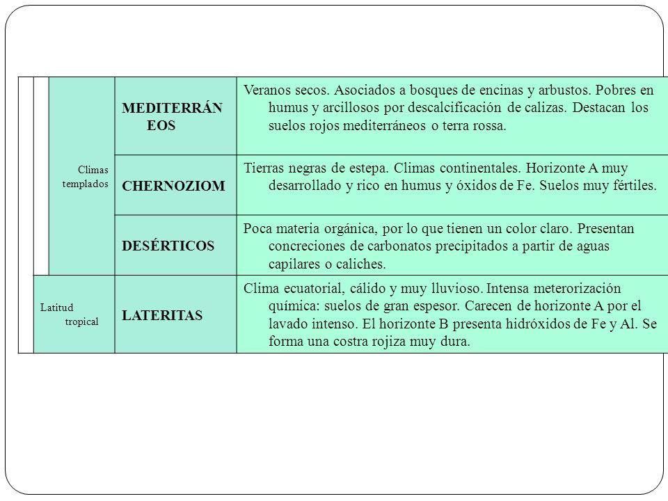Climas templados. MEDITERRÁNEOS.