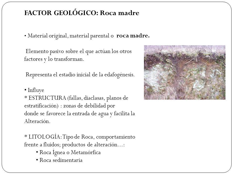 FACTOR GEOLÓGICO: Roca madre