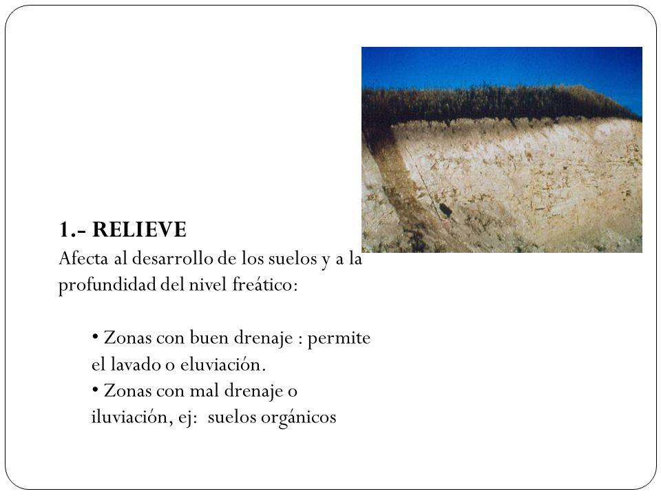 1.- RELIEVE Afecta al desarrollo de los suelos y a la profundidad del nivel freático: • Zonas con buen drenaje : permite el lavado o eluviación.