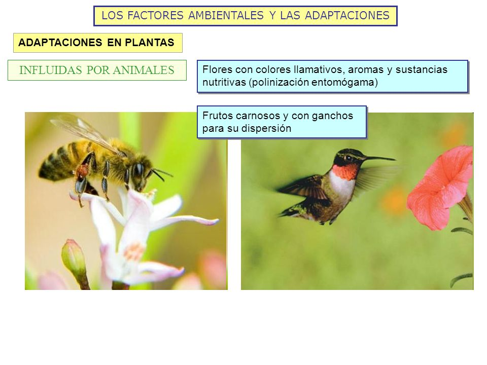 INFLUIDAS POR ANIMALES