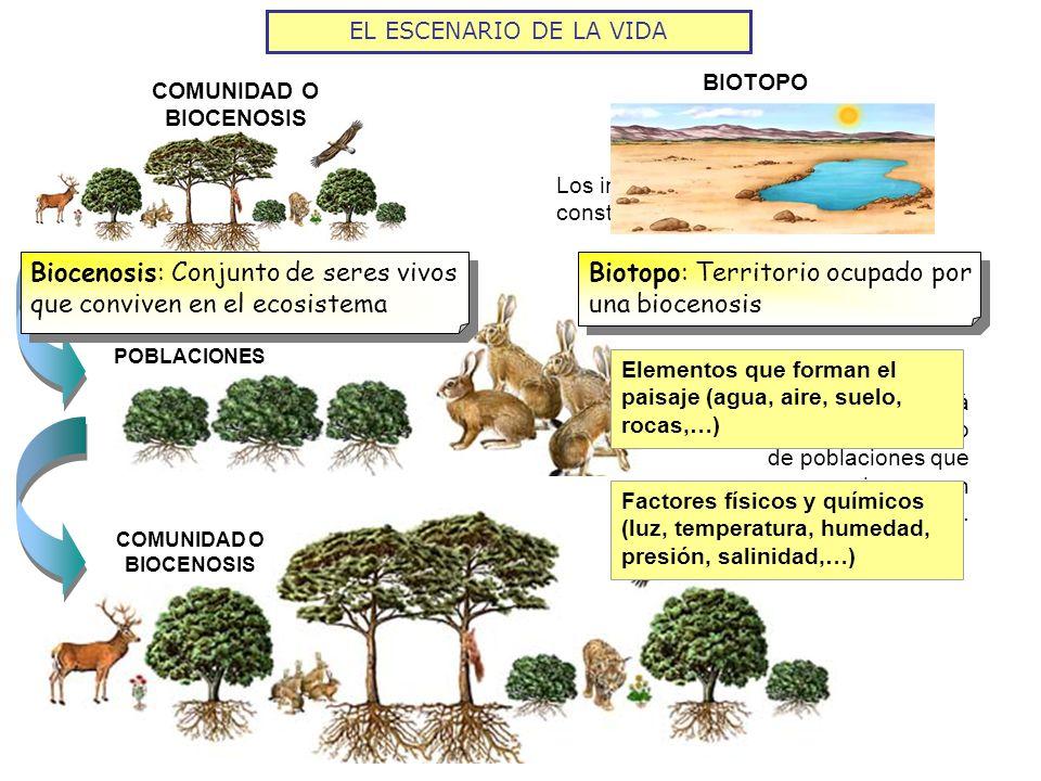 COMUNIDAD O BIOCENOSIS COMUNIDAD O BIOCENOSIS