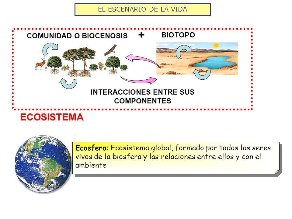 COMUNIDAD O BIOCENOSIS INTERACCIONES ENTRE SUS COMPONENTES