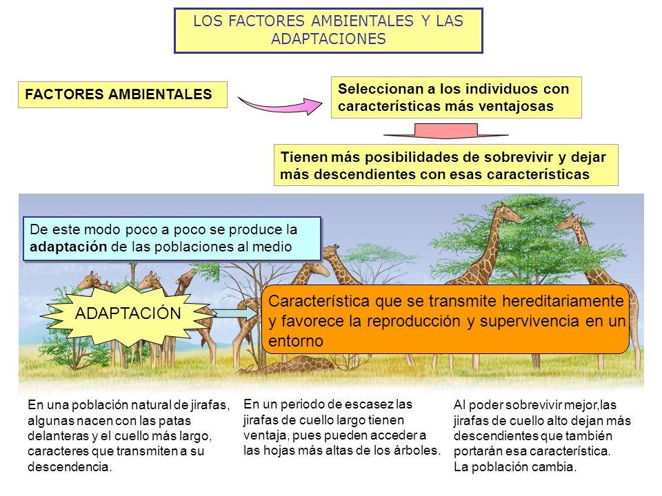 LOS FACTORES AMBIENTALES Y LAS ADAPTACIONES