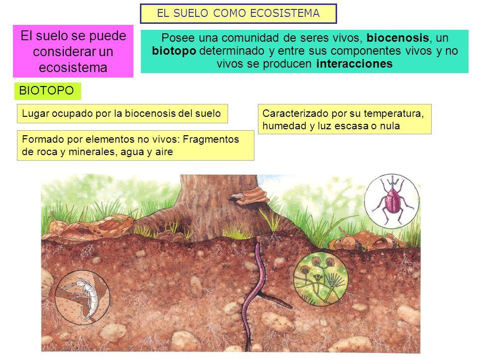 El suelo se puede considerar un ecosistema