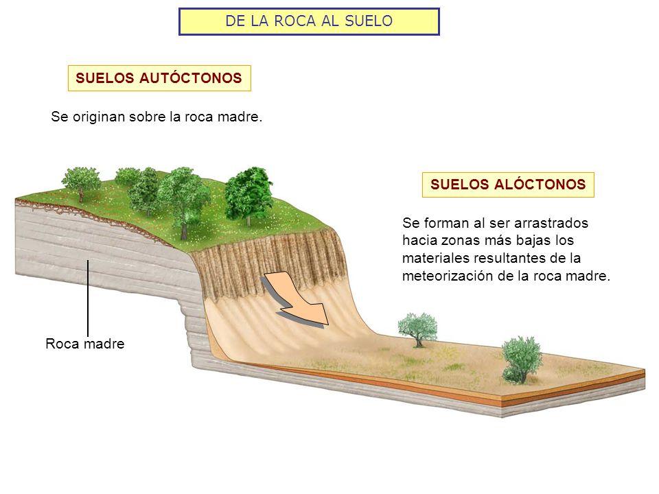 DE LA ROCA AL SUELO SUELOS AUTÓCTONOS. Se originan sobre la roca madre. SUELOS ALÓCTONOS.