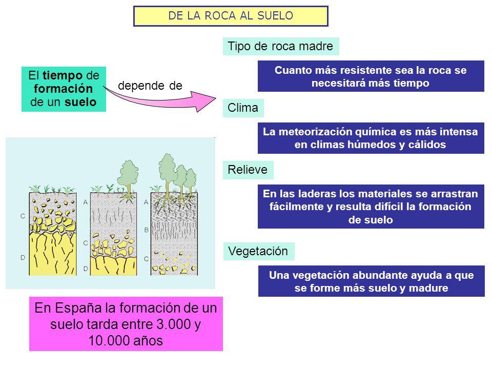 En España la formación de un suelo tarda entre 3.000 y 10.000 años