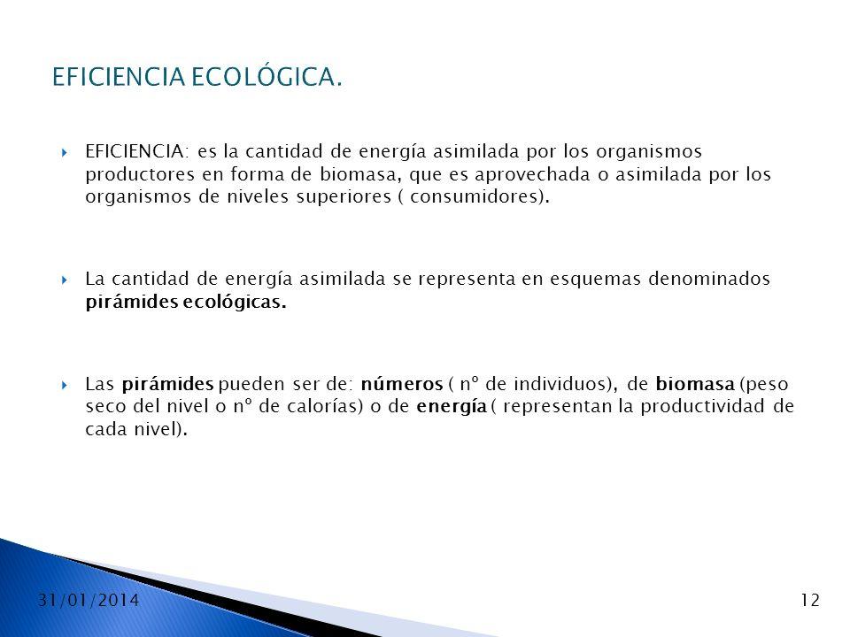 EFICIENCIA ECOLÓGICA.