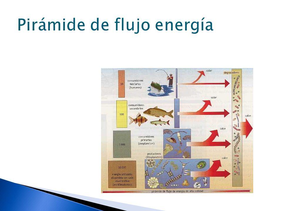 Pirámide de flujo energía